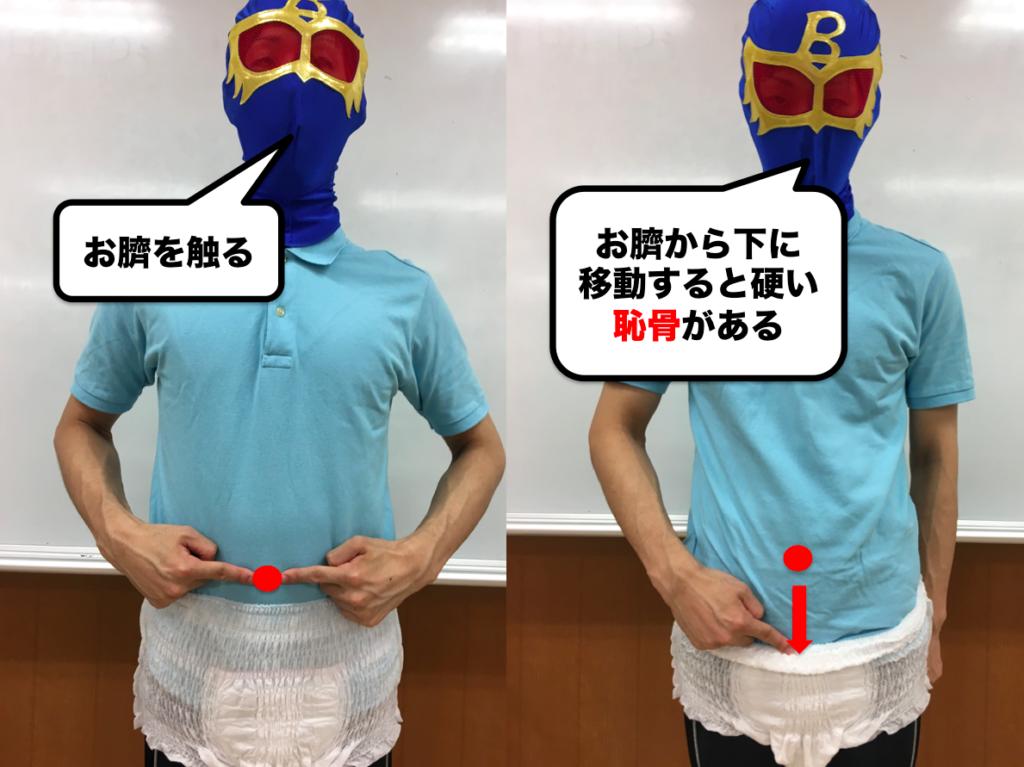 骨盤底筋の位置 確認 方法 恥骨 尾骨