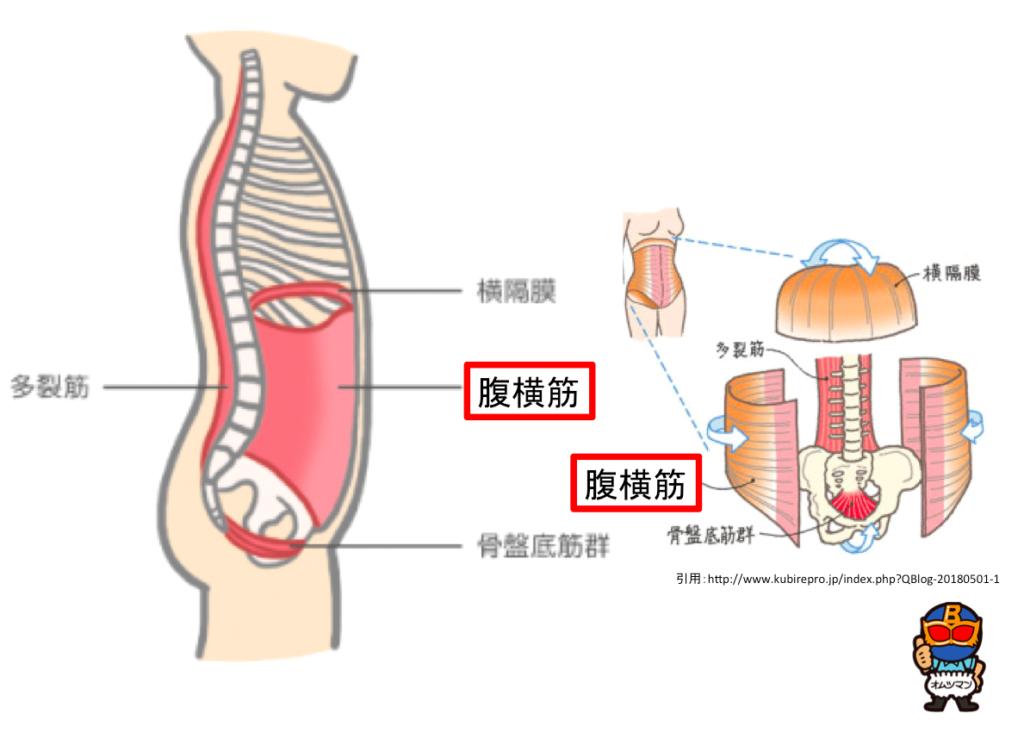 腹横筋 インナーユニット 鍛える 解剖